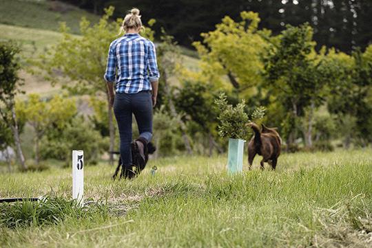kings truffle dogs